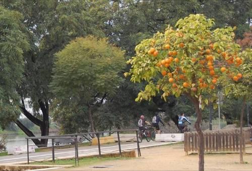 passeio-no-rio-22